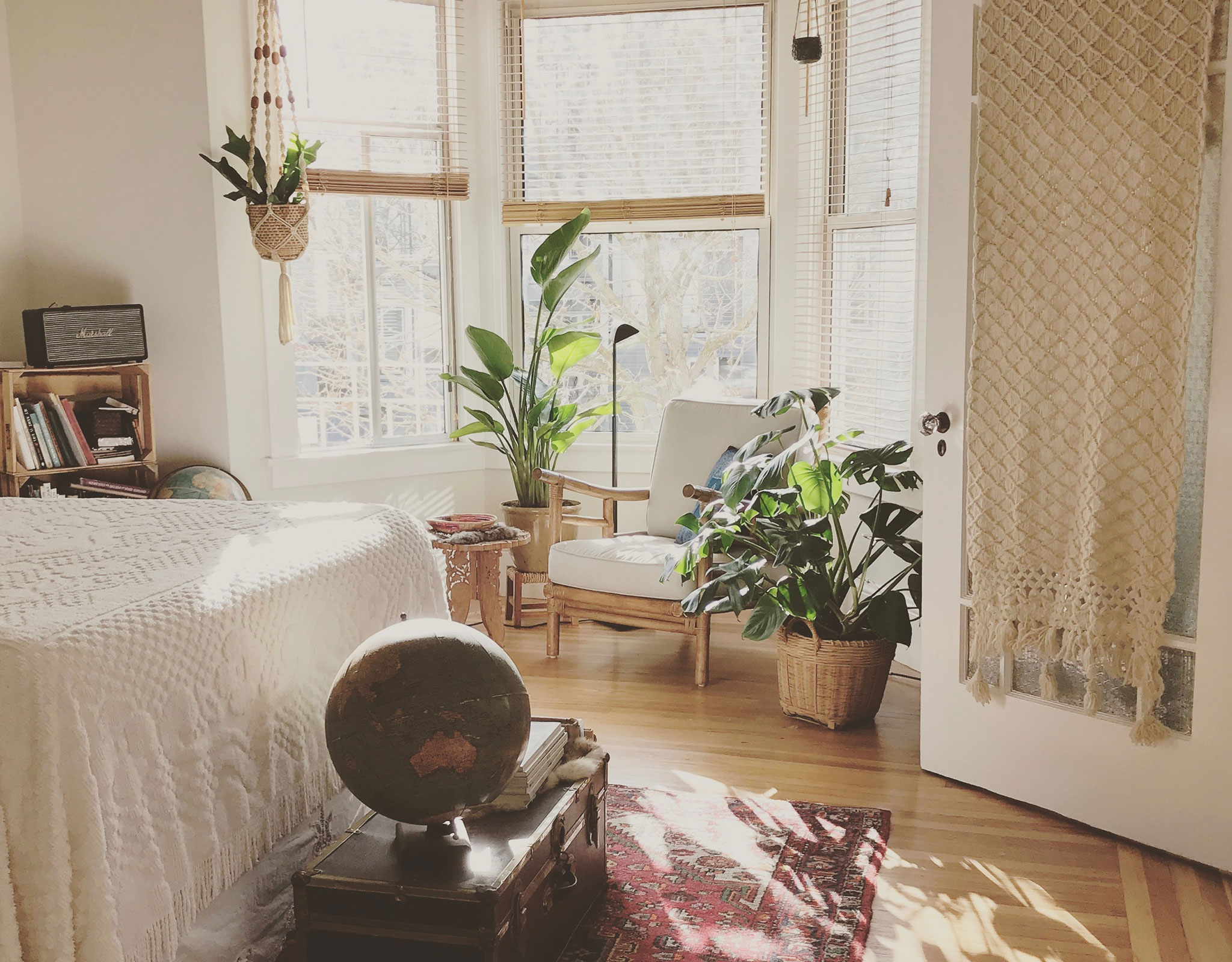 Sunlight shining through a window with plants